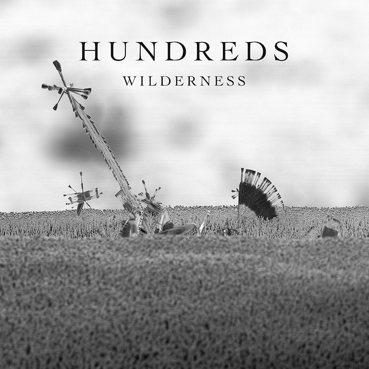 Hundreds – Wilderness