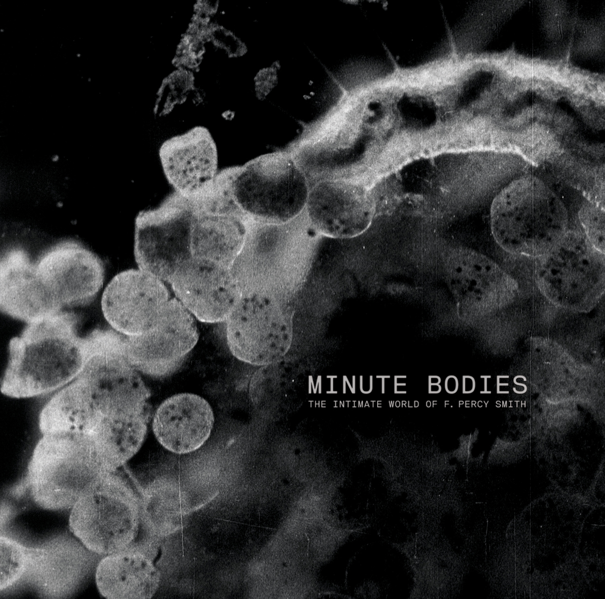 Tindersticks – Minute Bodies